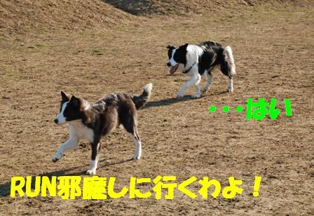 コピー ~ DSC_0912