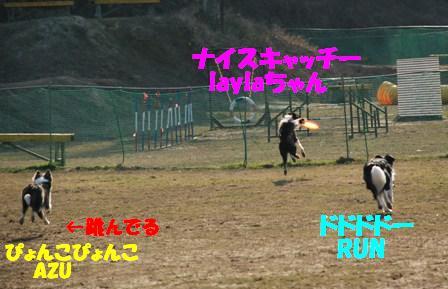 コピー ~ DSC_0909