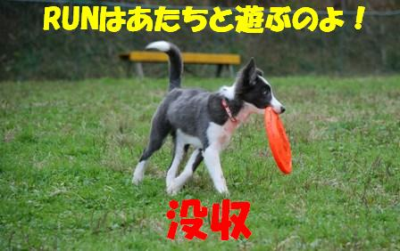 コピー ~ DSC_0561