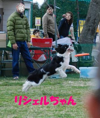 コピー (2) ~ DSC_0141
