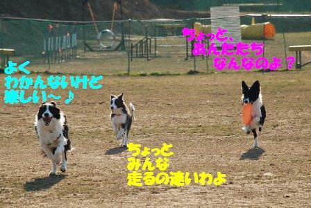 コピー ~ DSC_0908