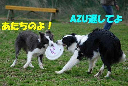 コピー ~ DSC_0980