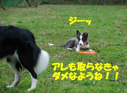 コピー ~ DSC_0567