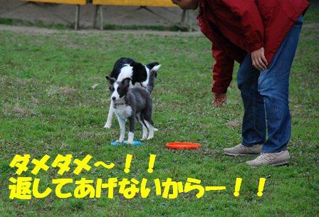 コピー ~ DSC_0570