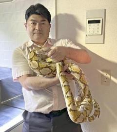 脱走ヘビ、捜索打ち切り翌日に専門家らが捕獲…飼い主は手放す意思「ご心配おかけした」