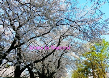 名古屋城♪