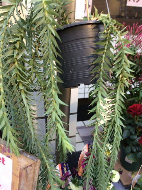 花ギフト フラワーギフト 誕生日 花 カノシェ話題 スタンド花 ウエディングブーケ 花束 花屋 IMG_9036