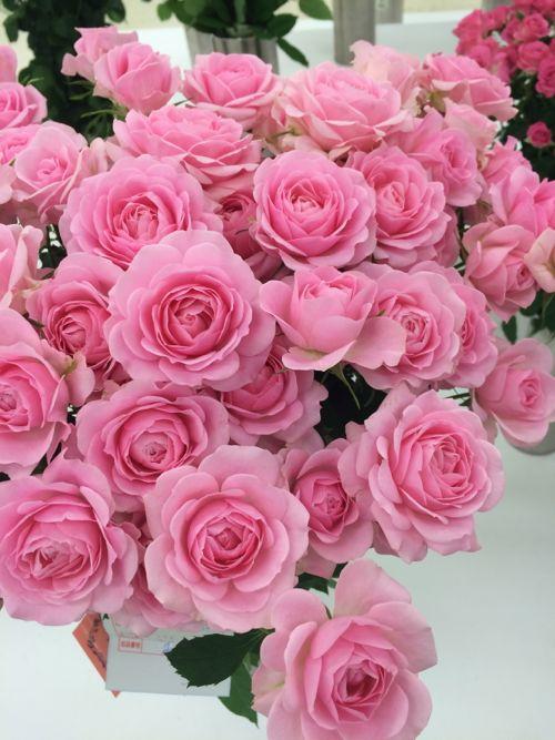 花ギフト|フラワーギフト|誕生日 花|カノシェ話題|スタンド花|ウエディングブーケ|花束|花屋|IMG_7119