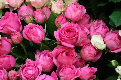 花ギフト|フラワーギフト|誕生日 花|カノシェ話題|スタンド花|ウエディングブーケ|花束|花屋|mari-antowanetto
