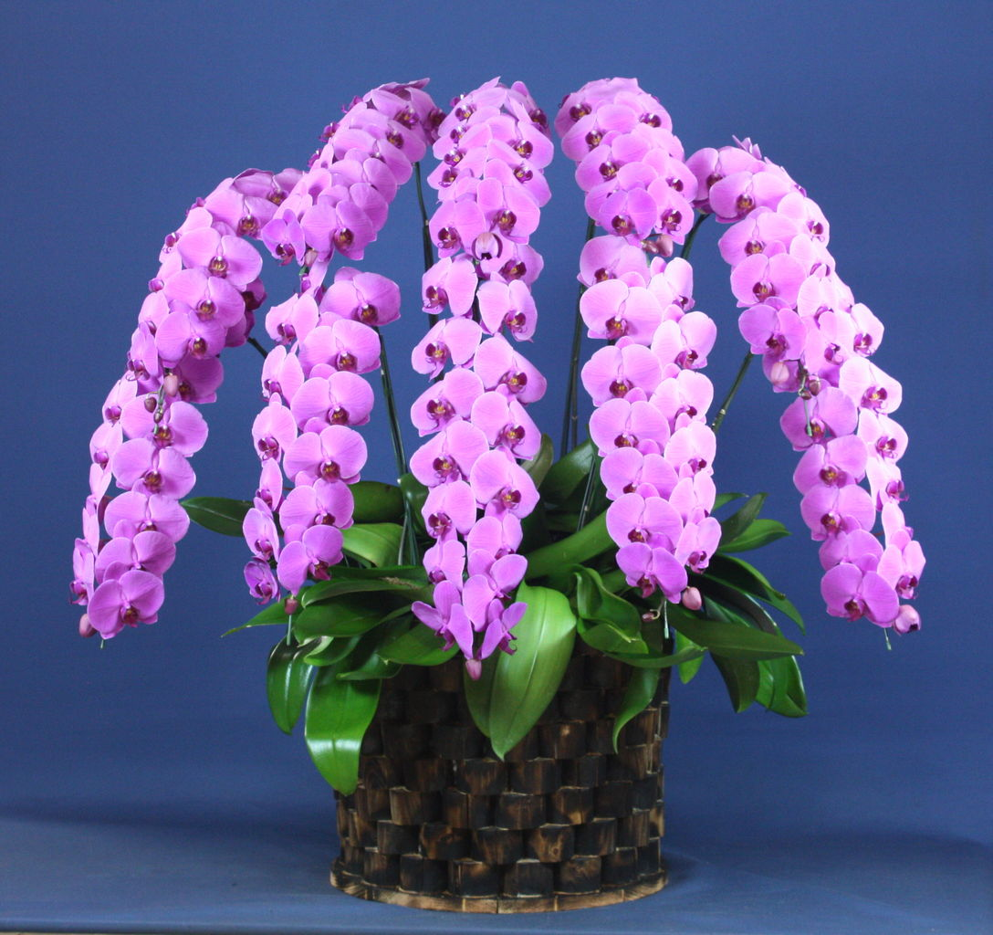 花ギフト|フラワーギフト|誕生日 花|カノシェ話題|スタンド花|ウエディングブーケ|花束|花屋|10FP