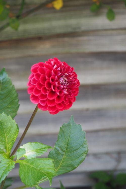 花ギフト|フラワーギフト|誕生日 花|カノシェ話題|スタンド花|ウエディングブーケ|花束|花屋|P8130186
