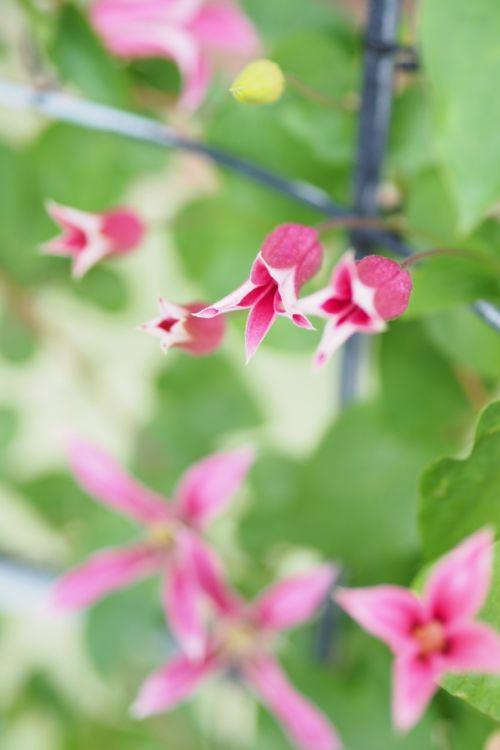 花ギフト|フラワーギフト|誕生日 花|カノシェ話題|スタンド花|ウエディングブーケ|花束|花屋|P6022682
