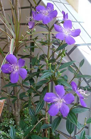 花ギフト フラワーギフト 誕生日 花 カノシェ話題 スタンド花 ウエディングブーケ 花束 花屋 のぼたん