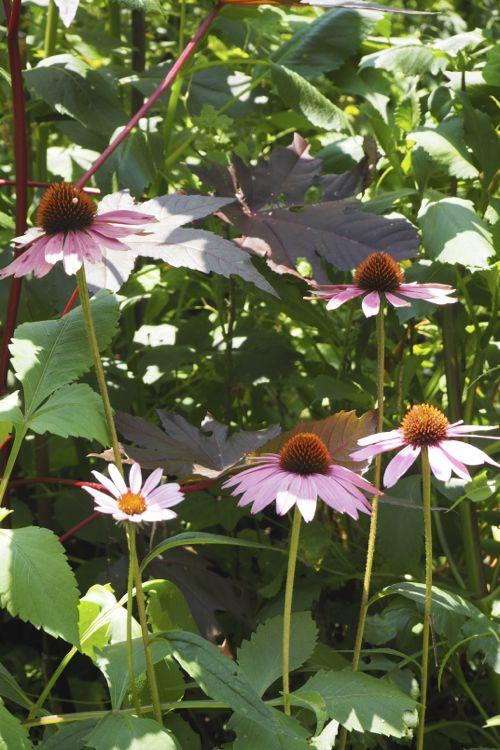 花ギフト|フラワーギフト|誕生日 花|カノシェ話題|スタンド花|ウエディングブーケ|花束|花屋|P8130156