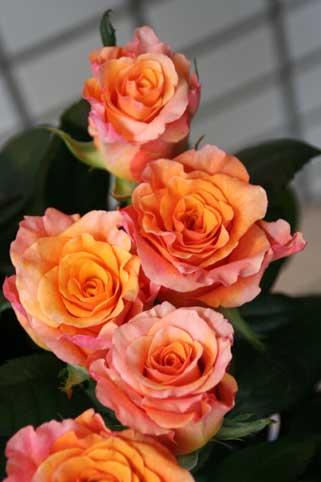 花ギフト|フラワーギフト|誕生日 花|カノシェ話題|スタンド花|ウエディングブーケ|花束|花屋|ミルバ