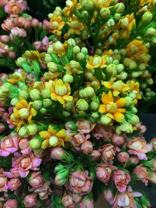 花ギフト|フラワーギフト|誕生日 花|カノシェ話題|スタンド花|ウエディングブーケ|花束|花屋|IMG_9179