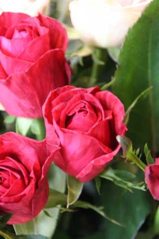 花ギフト|フラワーギフト|誕生日 花|カノシェ話題|スタンド花|ウエディングブーケ|花束|花屋|レッドインテュー