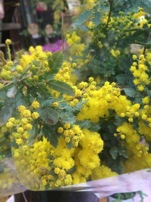 花ギフト|フラワーギフト|誕生日 花|カノシェ話題|スタンド花|ウエディングブーケ|花束|花屋|IMG_9858