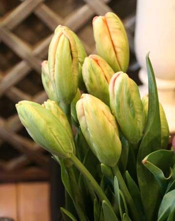 花ギフト|フラワーギフト|誕生日 花|カノシェ話題|スタンド花|ウエディングブーケ|花束|花屋|オレンジパロッと
