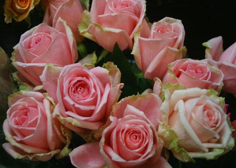 花ギフト|フラワーギフト|誕生日 花|カノシェ話題|スタンド花|ウエディングブーケ|花束|花屋|ロマンティックエンジェル