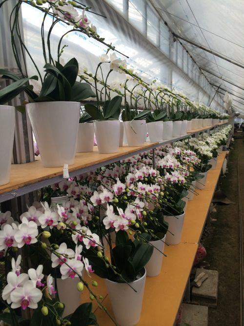 花ギフト|フラワーギフト|誕生日 花|カノシェ話題|スタンド花|ウエディングブーケ|花束|花屋|IMG_6589