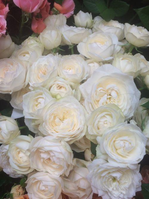 花ギフト|フラワーギフト|誕生日 花|カノシェ話題|スタンド花|ウエディングブーケ|花束|花屋|IMG_8104