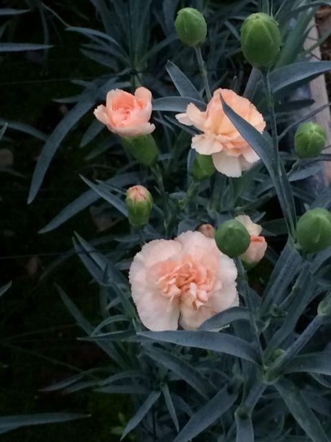 花ギフト|フラワーギフト|誕生日 花|カノシェ話題|スタンド花|ウエディングブーケ|花束|花屋|IMG_2185