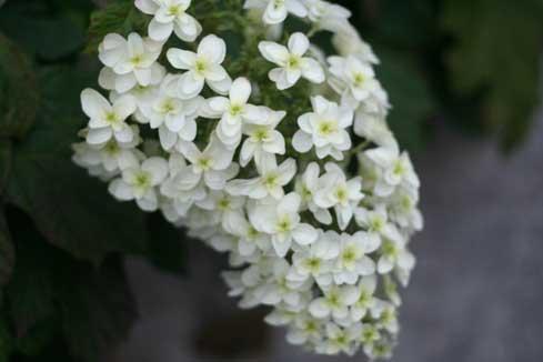 花ギフト フラワーギフト 誕生日 花 カノシェ話題 スタンド花 ウエディングブーケ 花束 花屋 柏葉
