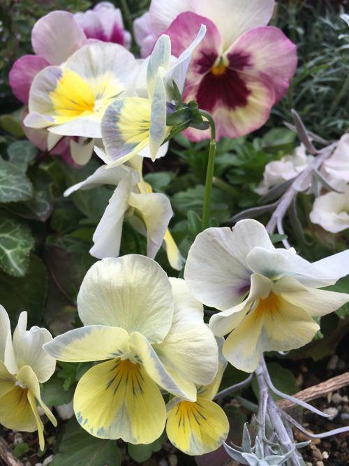 花ギフト|フラワーギフト|誕生日 花|カノシェ話題|スタンド花|ウエディングブーケ|花束|花屋|IMG_0102