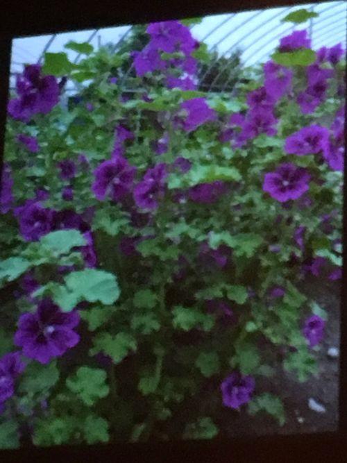 花ギフト|フラワーギフト|誕生日 花|カノシェ話題|スタンド花|ウエディングブーケ|花束|花屋|IMG_4211