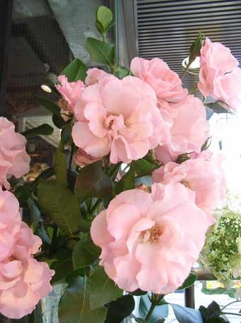 花ギフト|フラワーギフト|誕生日 花|カノシェ話題|スタンド花|ウエディングブーケ|花束|花屋|かよこさんのバラ