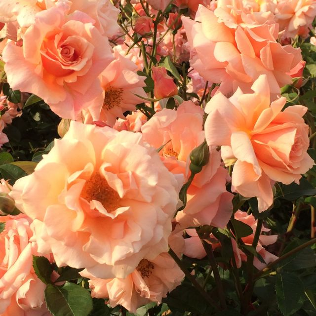 花ギフト|フラワーギフト|誕生日 花|カノシェ話題|スタンド花|ウエディングブーケ|花束|花屋|IMG_1491