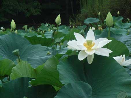 花ギフト|フラワーギフト|誕生日 花|カノシェ話題|スタンド花|ウエディングブーケ|花束|花屋|hasu