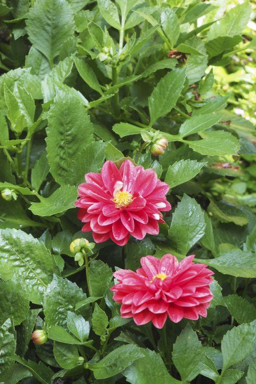 花ギフト|フラワーギフト|誕生日 花|カノシェ話題|スタンド花|ウエディングブーケ|花束|花屋|P8130127