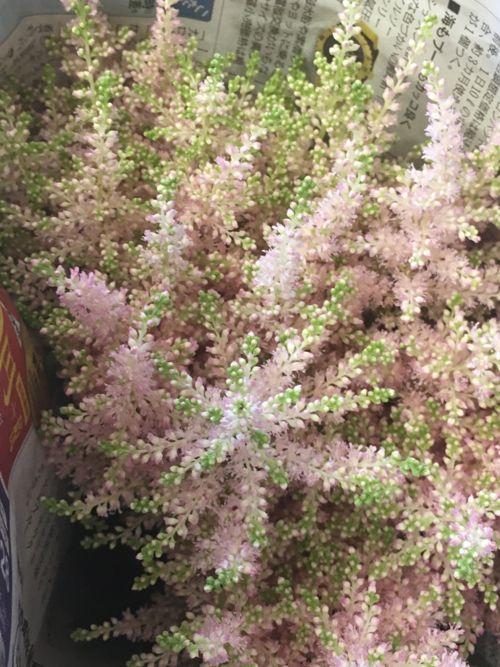 花ギフト|フラワーギフト|誕生日 花|カノシェ話題|スタンド花|ウエディングブーケ|花束|花屋|IMG_0985