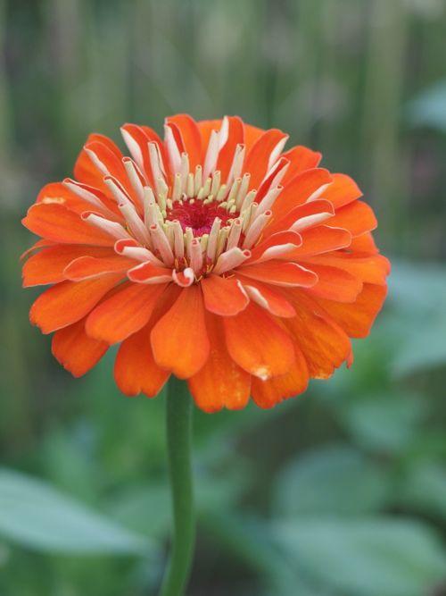 花ギフト|フラワーギフト|誕生日 花|カノシェ話題|スタンド花|ウエディングブーケ|花束|花屋|P8150172