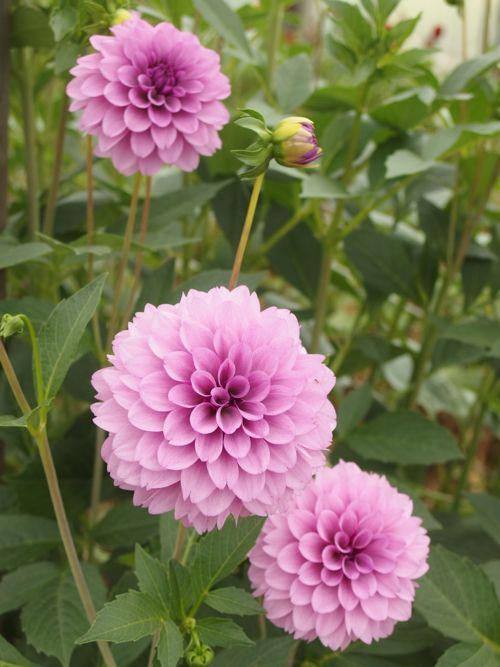 花ギフト|フラワーギフト|誕生日 花|カノシェ話題|スタンド花|ウエディングブーケ|花束|花屋|P6080057