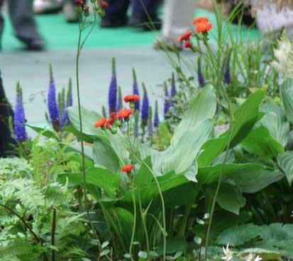 花ギフト|フラワーギフト|誕生日 花|カノシェ話題|スタンド花|ウエディングブーケ|花束|花屋|赤花