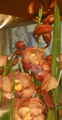 花ギフト|フラワーギフト|誕生日 花|カノシェ話題|スタンド花|ウエディングブーケ|花束|花屋|シンビ