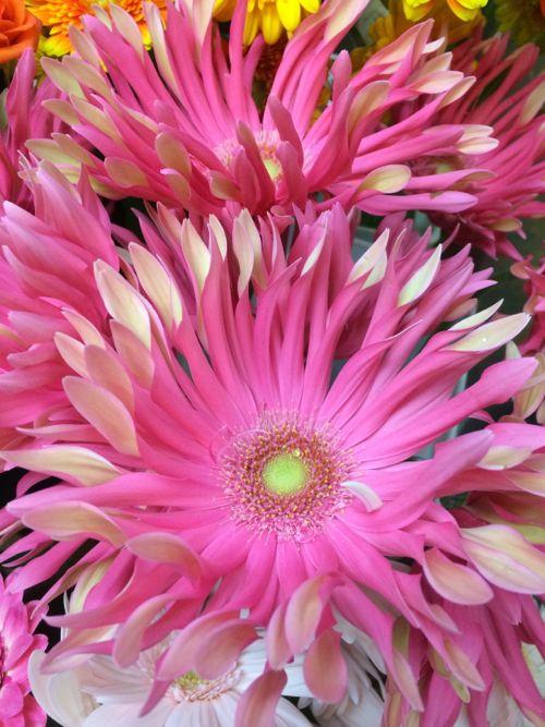 花ギフト|フラワーギフト|誕生日 花|カノシェ話題|スタンド花|ウエディングブーケ|花束|花屋|IMG_7981