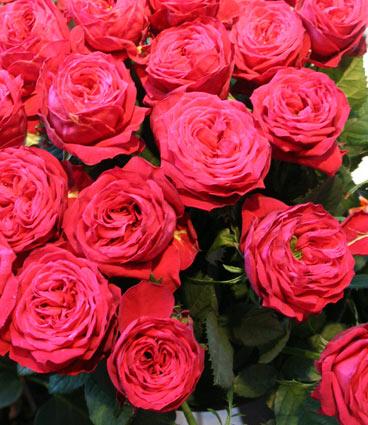 花ギフト|フラワーギフト|誕生日 花|カノシェ話題|スタンド花|ウエディングブーケ|花束|花屋|レッドラナンキュラ