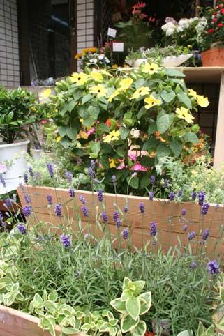花ギフト|フラワーギフト|誕生日 花|カノシェ話題|スタンド花|ウエディングブーケ|花束|花屋|ツンベルギア