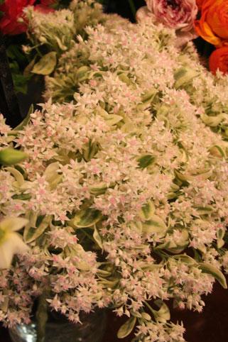 花ギフト|フラワーギフト|誕生日 花|カノシェ話題|スタンド花|ウエディングブーケ|花束|花屋|セダム