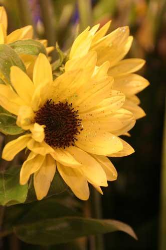 花ギフト|フラワーギフト|誕生日 花|カノシェ話題|スタンド花|ウエディングブーケ|花束|花屋|きらきら