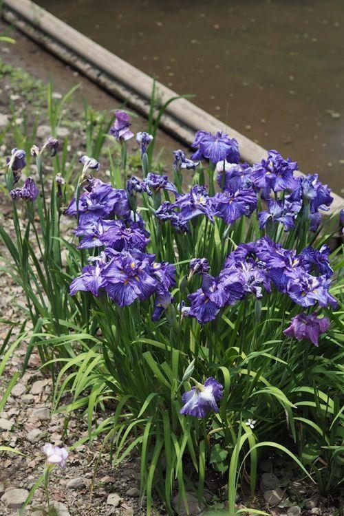 花ギフト|フラワーギフト|誕生日 花|カノシェ話題|スタンド花|ウエディングブーケ|花束|花屋|P6032810