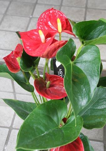 花ギフト|フラワーギフト|誕生日 花|カノシェ話題|スタンド花|ウエディングブーケ|花束|花屋|IMG_8005