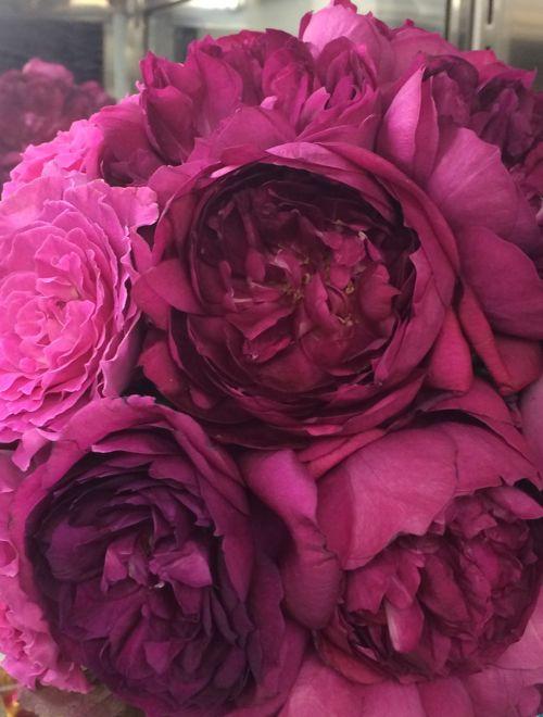 花ギフト|フラワーギフト|誕生日 花|カノシェ話題|スタンド花|ウエディングブーケ|花束|花屋|IMG_6325