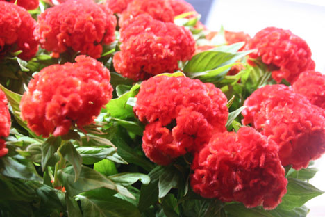 花ギフト|フラワーギフト|誕生日 花|カノシェ話題|スタンド花|ウエディングブーケ|花束|花屋|オレンジケイトウ