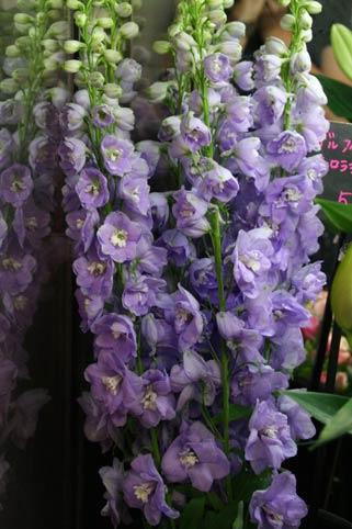 花ギフト|フラワーギフト|誕生日 花|カノシェ話題|スタンド花|ウエディングブーケ|花束|花屋|IMG_8335