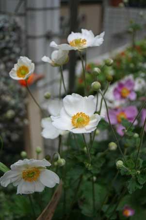 花ギフト|フラワーギフト|誕生日 花|カノシェ話題|スタンド花|ウエディングブーケ|花束|花屋|秋明